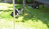 Frederik og Felix sommer hygger