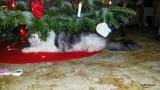 Glædelig Jul fra Mille