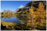 Autumn at Lake O'Hara - Mount Huber from Opabin Plateau