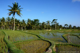 Indonesia - Bali Bliss