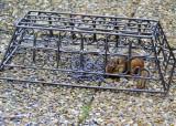 Chipmunk feeder