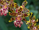Bronx Botanical Garden - Orchid Show 2014