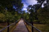 Bottomland Forest