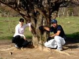 Isa et Steph auprès d'une vénérable aubépine