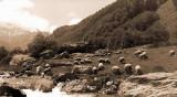 Pont de Camps  (Zeiss Ikon Icarette 6,5x11)