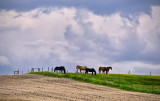 _DSC3203pb.jpg  Horses and HIlls