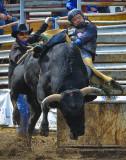 _SDP5114apb.jpg The Bull Rider