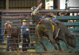 _DSC5441pb.jpg  YUP! someday I am going to ride the bulls....
