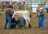 _DSC5980pb.jpg Wild Cow Milking