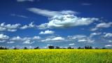 _SDP6286a.jpg Prairie Canola fields