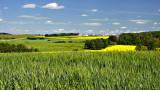_SDP6331.jpg  Mixed Farming in Central Alberta
