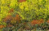 _DSC0357pb.jpg   Fall Colors