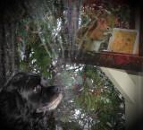 _SDP7969.jpg  Dogs best Friend