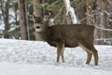 _DSC0820.jpg   Another Bambi Shot