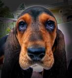 _DSC0524.jpg My Friends Dog