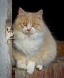 _GWW6298pb.jpg  Just a Barn Cat