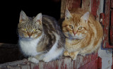 _GWW6285.jpg  Two More Barn Cats