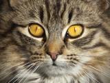 _GWW6303.jpg  Happy Kat