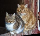 _GWW6286pb.jpg  Just Two Farm Kats
