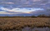 _DSC1017pb.jpg  Bullrushes on the Pond