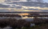 _DSC1029pb.jpg  Ducks Unlimited Pond near Wetaskiwin