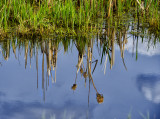 _DSC8406gf.jpg Reflection On the Pond