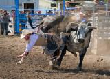 _GWW8081pb.jpg  The Bull Rider
