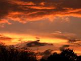 9-10-2013 Cloud Dolphin.jpg