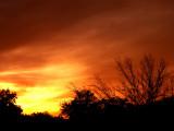 11-10-2014 Sunset  1.jpg
