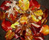 1-13-2015  Leaf  Litter.jpg