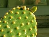 5-2-2015 Cactus in Window Box