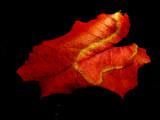 12-28-2016 Winter Leaf 3