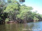 Shan-T Native Kayak Tour