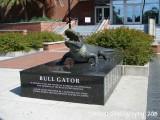 Bull Gator