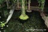 Everglades Atrium