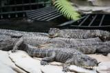 Gator Springs