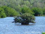 Lemon Lake