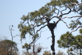 Bald Eagle Nest on Green Trail