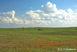Prairie scape--Ferruginous Hawk country