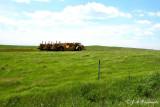 new era awaiting the prairie