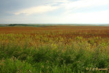 Coteau prairie