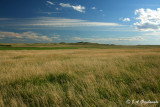 Bowman County, sw ND