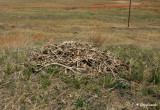 Historic ground nest of Ferruginous Hawk