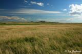 Prairie west of Bowman