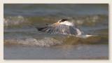 Oiseaux_Floride_2013