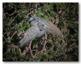 oiseaux__animaliers_floride_2012