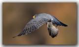 oiseaux_ 2016