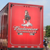 Budweiser Clydesdales in New Hope 2013
