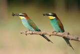 Hungary Birdwatching 2015