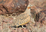 Morocco Birdwatching Spring 2016